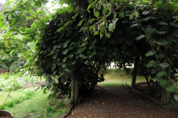 bnb_kiwifruit
